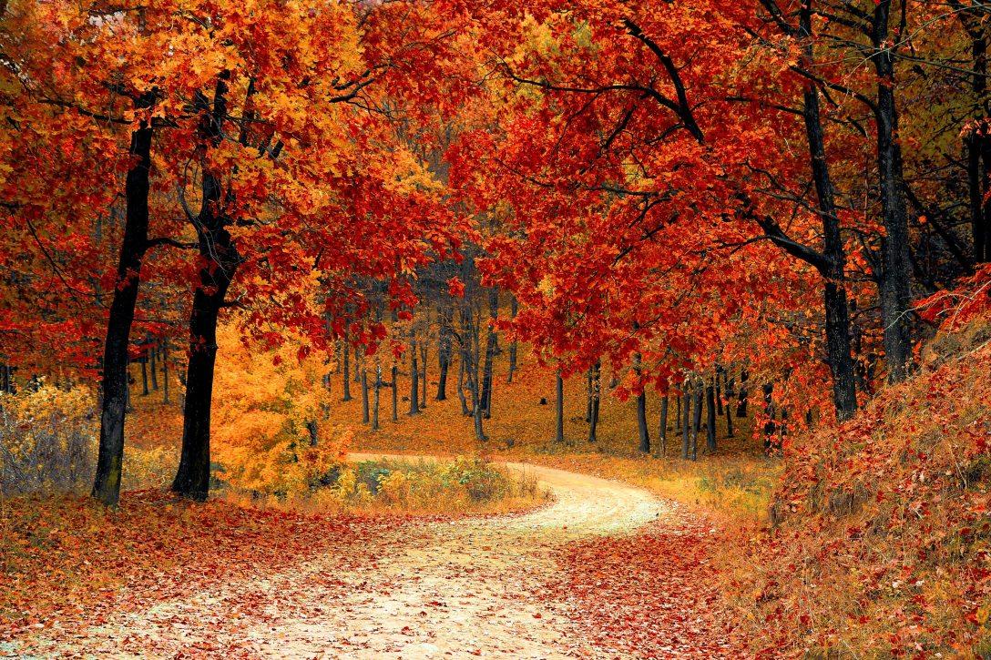 Fall Scenes Karla Sullivan